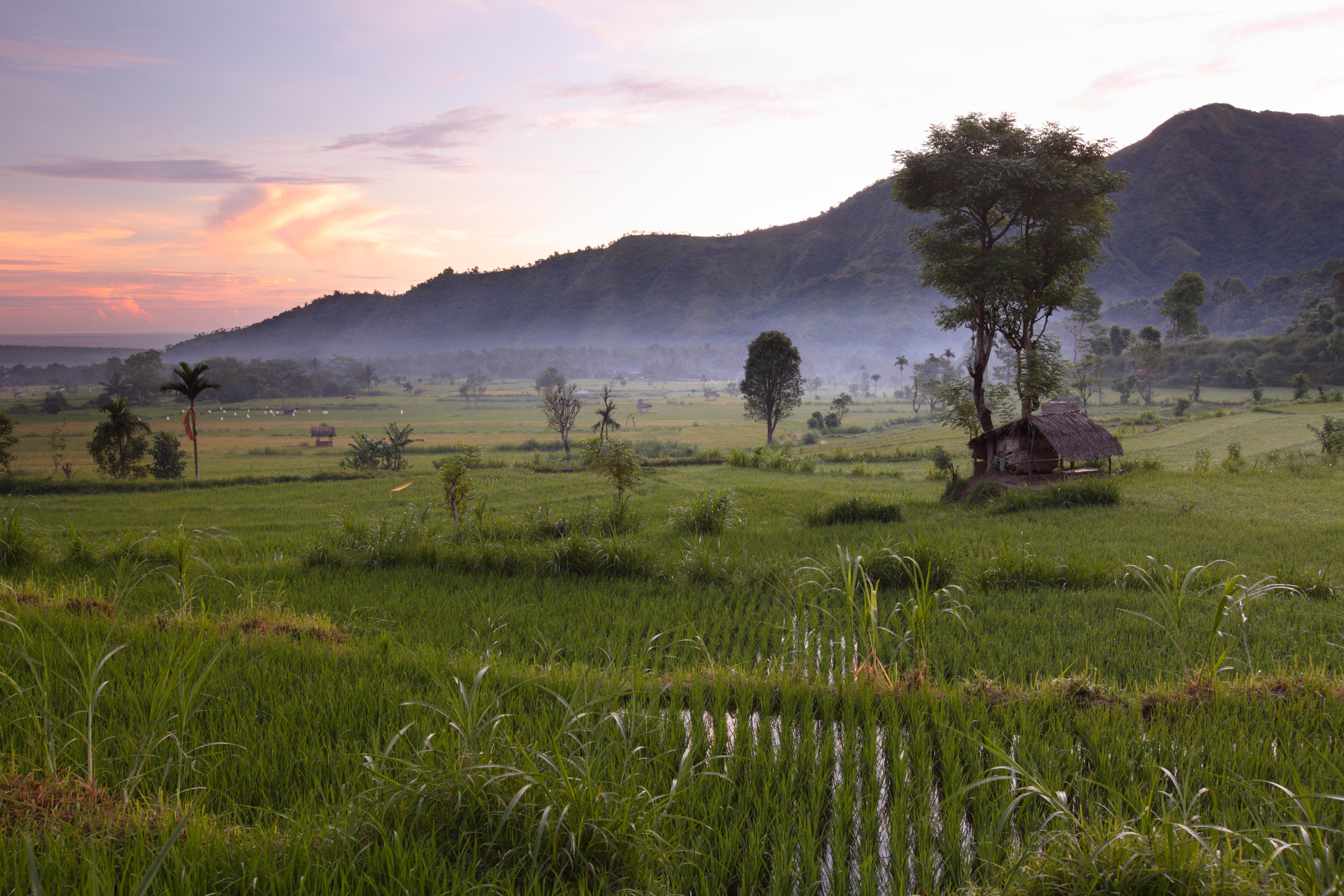 Bali Rundreise -Landschaft - Bali Barat Nationalpark - Bali Indonesien Reisen